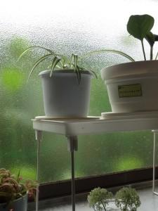 窓越しに、インドア植物とアウトドア植物。