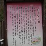 9種の桜由来