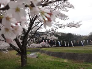 10種桜からの眺め